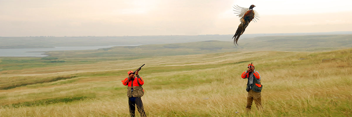 Abundant cropland and the Ft. Pierre National Grassland provide excellent pheasant habitat.