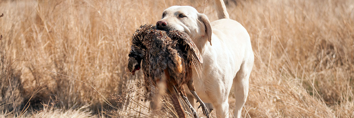 Many of Pierre's hotels are hunting dog friendly!